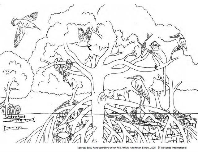 Free Coloring Pages Of Color Forest Ecosystem Ecosystem Coloring Pages